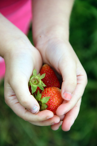Auttie_Closeup-Strawberries-in-hands