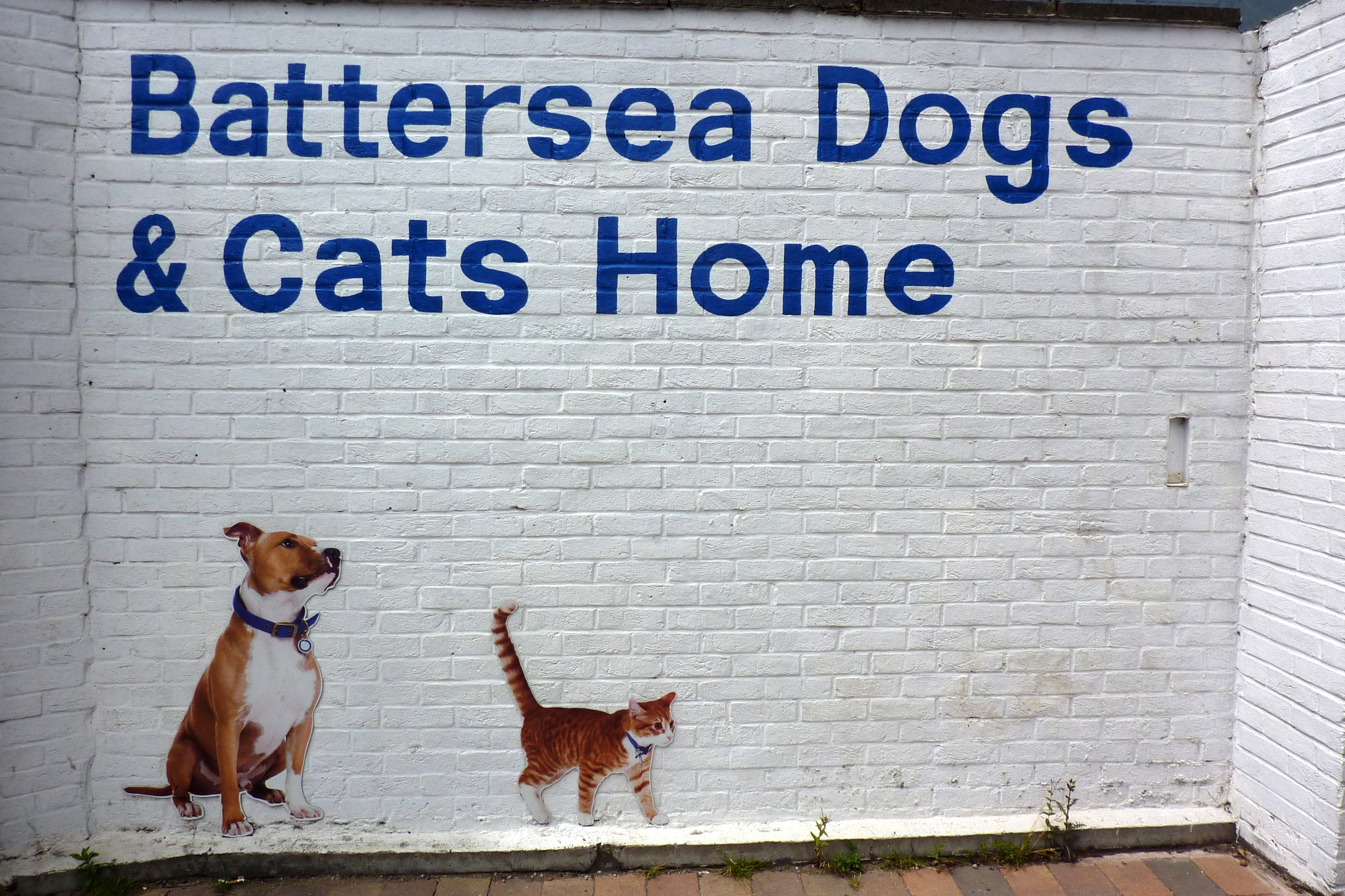 Battersea Dogs Home Cardiff