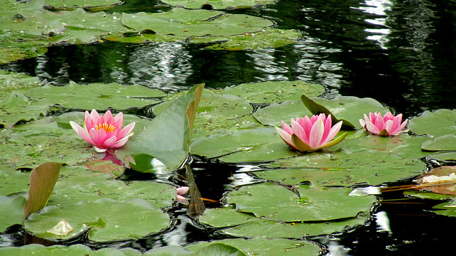 Giverny Monet's waterlilies