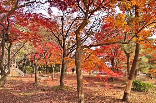 【写真】2012 紅葉 : 清凉寺/2020-09-21/IMGP7824