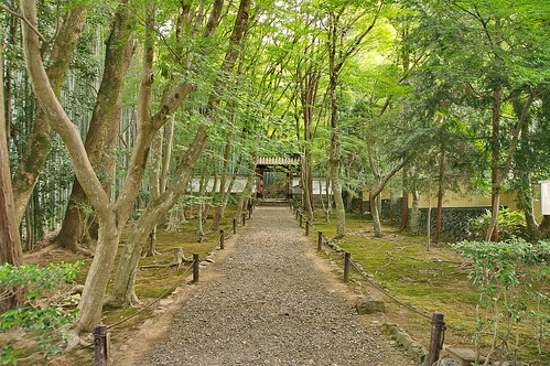【写真】2013 青葉 : 地蔵院/2021-07-28/IMGP0959