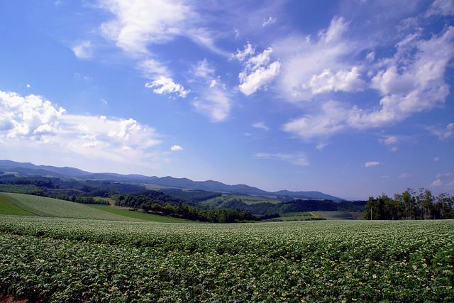 ジャガイモ畑と流れる白い雲