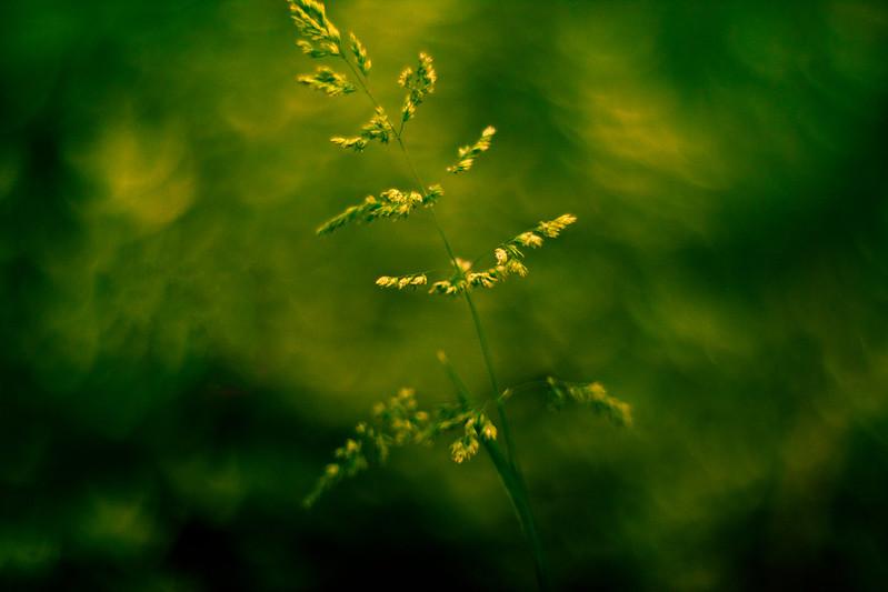 IMAGE: http://farm3.staticflickr.com/2836/9317967393_5c1ec6f2fc_c.jpg