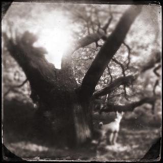 magic_tree with basenji ilani