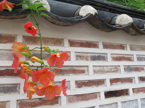 Hanok Village Flowers