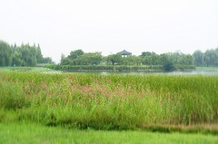 field(0.0), paddy field(0.0), fen(1.0), wetland(1.0), swamp(1.0), floodplain(1.0), prairie(1.0), agriculture(1.0), land lot(1.0), polder(1.0), grass(1.0), plain(1.0), natural environment(1.0), meadow(1.0), lawn(1.0), salt marsh(1.0), pasture(1.0), rural area(1.0), grassland(1.0), pond(1.0), bog(1.0),
