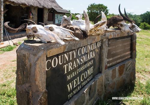 Kenia - Masai Mara 10