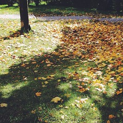 All the leaves that had fallen from the maple trees!! It's fall, and it's beautiful! Especially when admired with your loved ones!! And that light and shadow play....