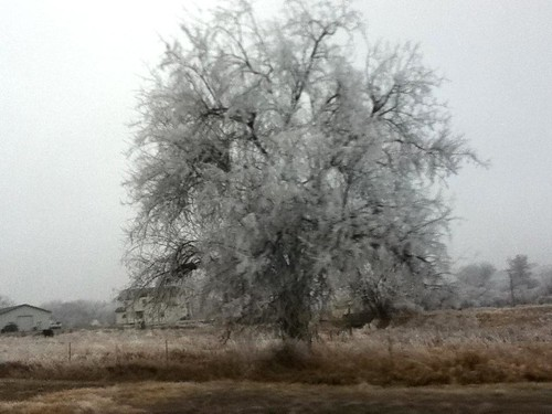 Hoar Frost ~ West Richland, Washington