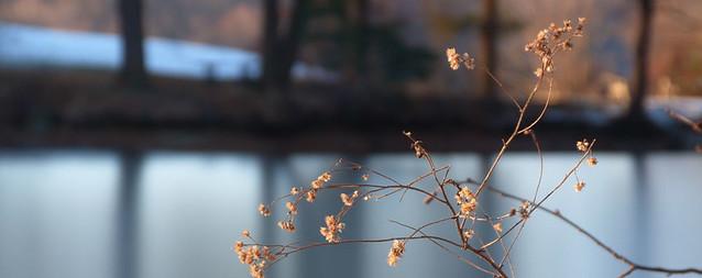 pondweeds