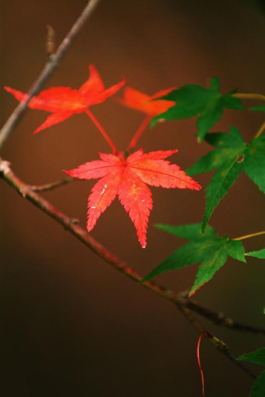 秋色まとめ