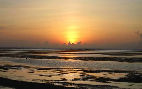 夕陽下的裸露海草床(孫筱雲攝)