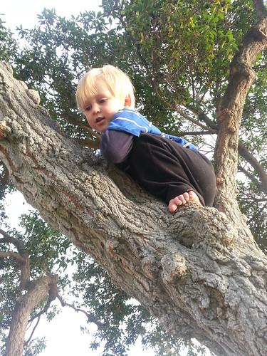 Owen is a monkey