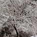 Snow Covered Branches by shannon_z