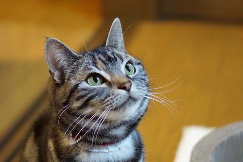 cat #347