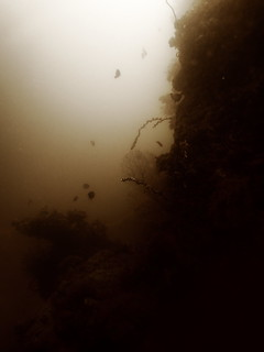 Drop-Off, Underwater Cave, Menjangan