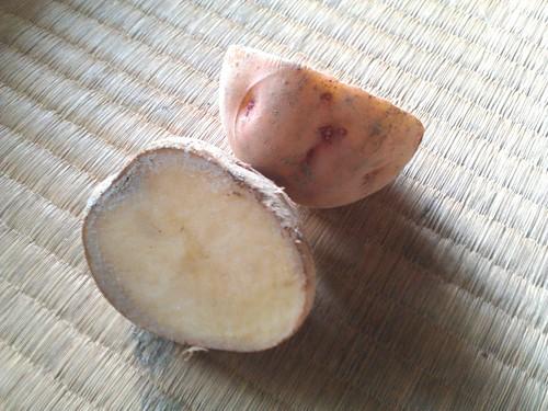 ジャガイモ種芋を天日乾燥