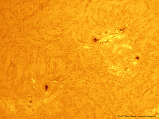 Many Sunspots   in H-ALpha Light on 04-16-2014