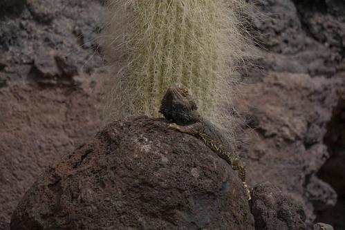 Oasis-Park Fuerteventura-Tiere