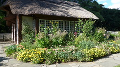 The Cottage Garden is Very Yellow