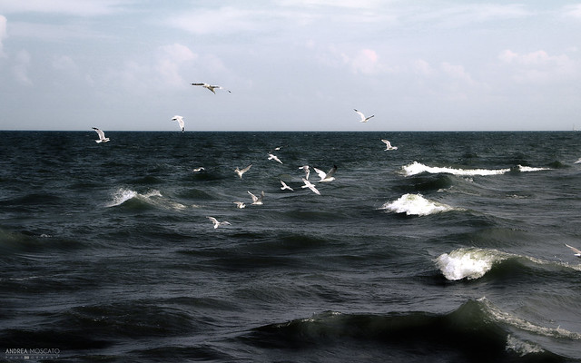 Lake Erie - Point Pelee National Park (Ontario, Canada)