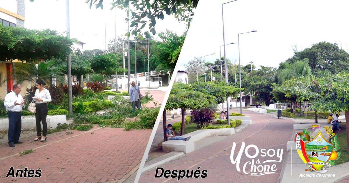 Alcaldía de Chone realiza poda en el Parque de las Madres