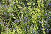 Wild Flowers 30.04 (4)