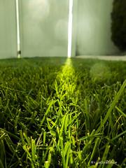 grass-sunlight-fence.jpg
