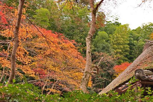 【写真】2012 紅葉 : 祇王寺/2021-09-05/IMGP7858