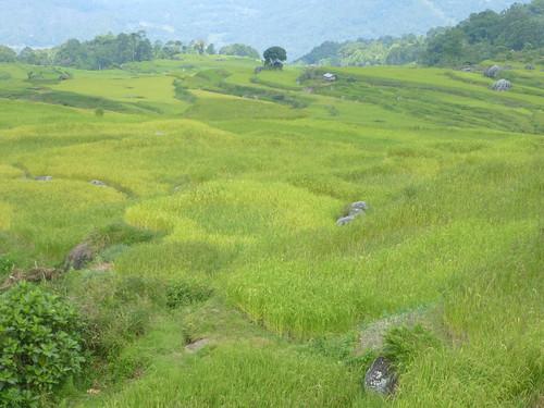 Sulawesi13-Lo'ko Mata-Ke'pa (14)