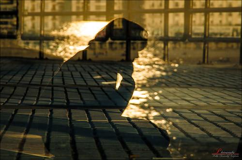desktop windows sunset wallpaper sun reflection verde apple yellow de mirror san mood ipod sad sebastian state thinker creative commons screen silouette full paseo triste amarillo reflect thinking reflejo refraction pensativo hd through silueta cristal donosti siluet fondo euskadi pensar nuevo donostia pantalla estado guipuzcoa saver pensando windo refract ipad walpaper silouet traves refraccion reflejado