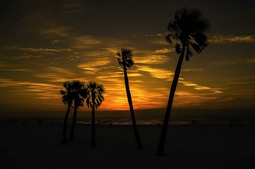 trees sunset beach pentax florida silhouettes palm k5 clearwater