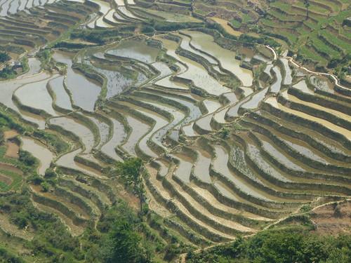 Yunnan13-Yuanyang 16-Qingkou (8)
