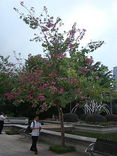 093 Kowloon Park