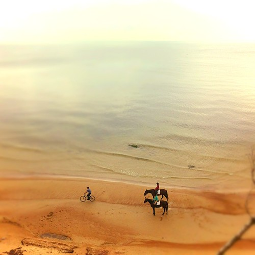 sea horses horse beach water bicycle coast miniature sand dof baltic klaipeda lithuania tiltshift