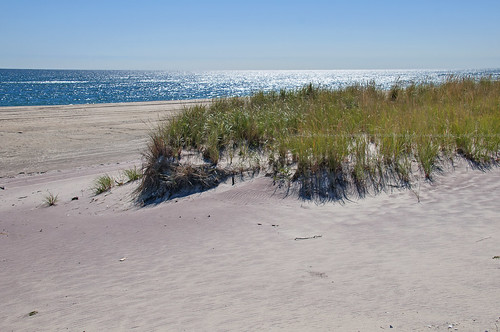 Fire Island Dune Grass by Alida's Photos