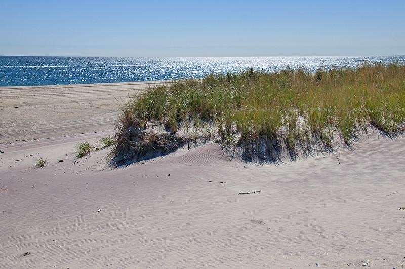 Fire Island Dune Grass