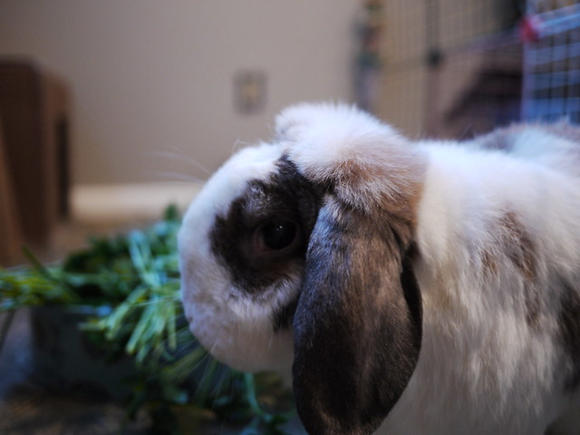 betsy wonders if I'm just taking a photo or if I've got treats