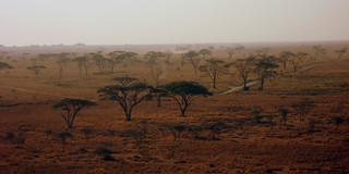 Blick auf die Serengeti von oben