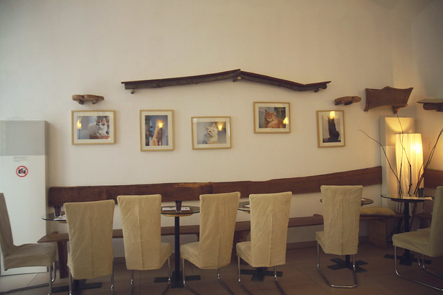 frames neko cafe