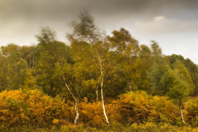 Swaying trees   ...F 35
