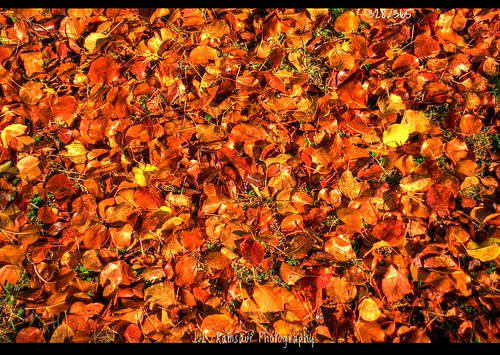 red orange fallleaves fall nature leaves yellow rural landscape outdoors photography photo leaf nikon tennessee fallcolors pic photograph thesouth 365 hdr cumberlandplateau ruralamerica photomatix putnamcounty cookevilletn bracketed project365 middletennessee 2013 ruraltennessee hdrphotomatix ruralview hdrimaging 365daysproject 365project 365photos ibeauty southernlandscape 328365 hdraddicted d5200 southernphotography screamofthephotographer hdrvillage jlrphotography photographyforgod worldhdr nikond5200 hdrrighthererightnow engineerswithcameras hdrworlds god'sartwork nature'spaintbrush jlramsaurphotography 1yearofphotographs 365photographsinayear 1shotperdayfor1year