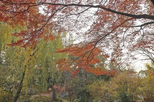 【写真】2013 紅葉 : 白沙村荘/2020-12-28/IMGP3717