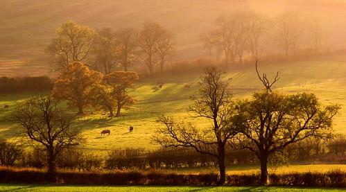 Autumn Evening at Moor Hill II