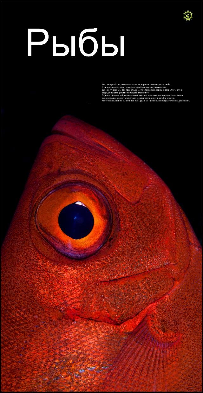 Рыбы_1_1002