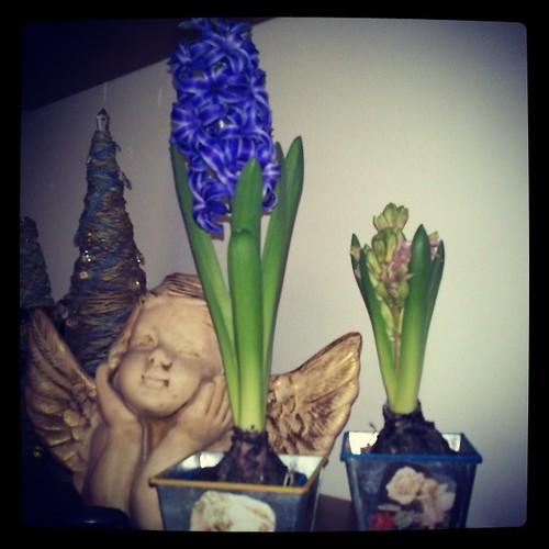 Mis bulbos de invierno by alialba