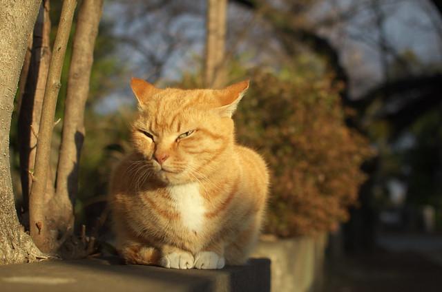東京路地裏散歩 谷中のネコ 2014年1月26日