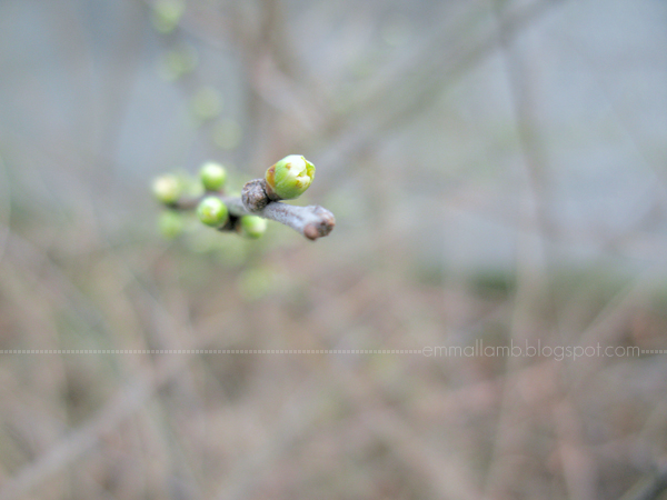 budding winter colour | Emma Lamb
