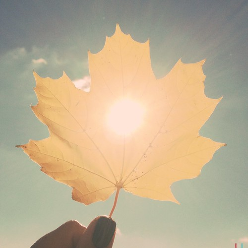 autumn sun sunlight fall leaf pastel flare softtones softcolors hipstamatic adler9009lens blankofreedom13film juicyorangegelflash