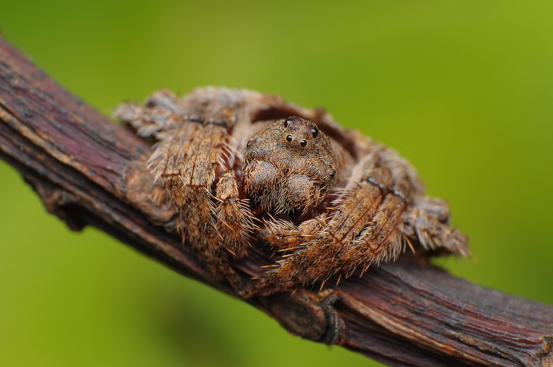 Wrap-around Spider